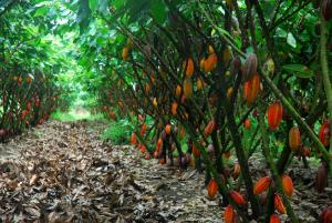 cferland-plantation