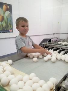 Jeune relève dans la production d'œufs. Photo: Cathy Chenard